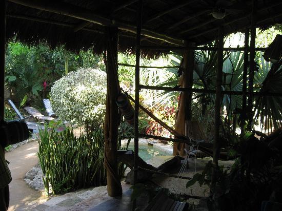 La Selva Mariposa: View from Room 1 porch