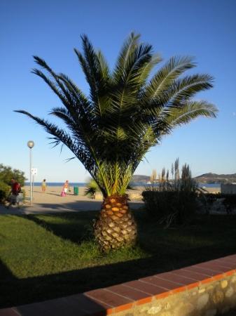 Argeles-sur-Mer, Frankreich: Palma Palma!!!