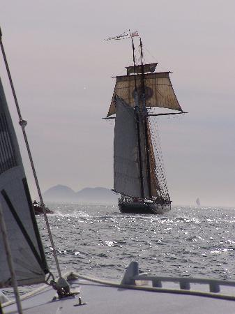 Sail Stars & Stripes USA-11: we steer clear of this vessel