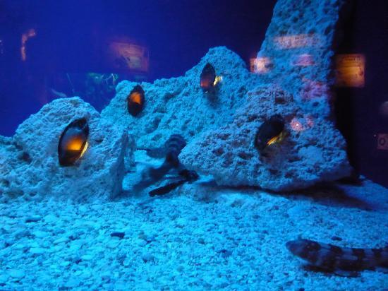 Ripleys Aquarium Shark Eggs