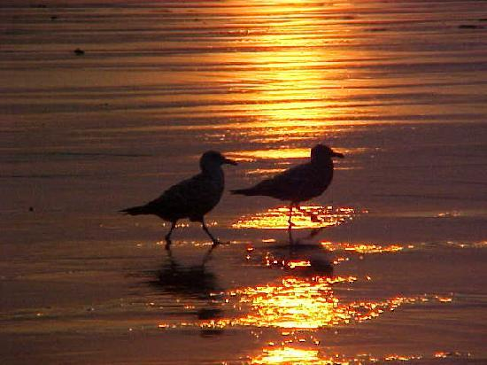 Grand View Inn and Cottages: Gulls at Sunrise