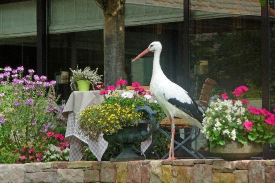 Hôtel des Berges : Yes....the stork wanders around happily