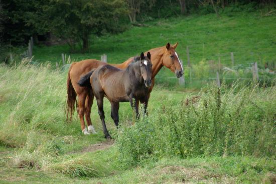 Mont Saint-Aubert, Belgium: chevaux qui prennent du bon temps
