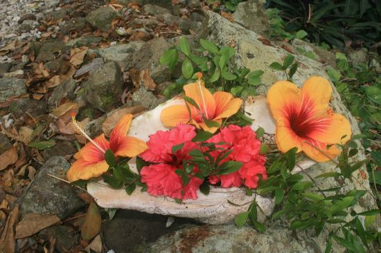 Namena Island Dive Resort: Daily flowers