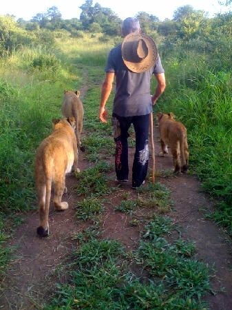 Victoria Falls Safari Lodge: walking with lions