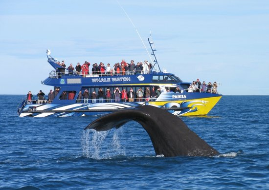 Whale Watch : Paikea and Tail Shot