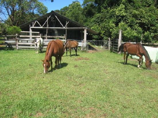 Tirrintippin Horse Riding: Horses!