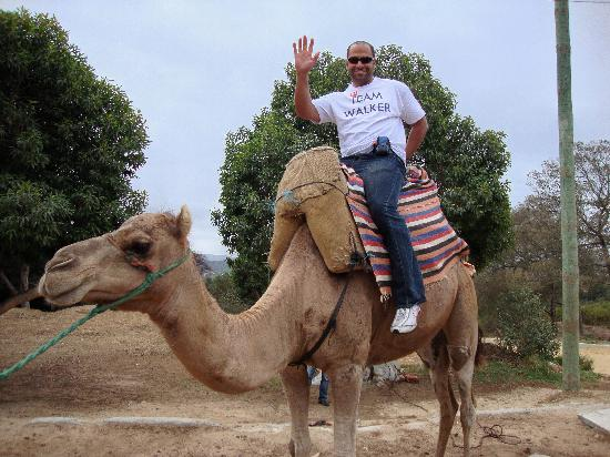 La Villa Marbella: Camel ride on our day trip to Morocco