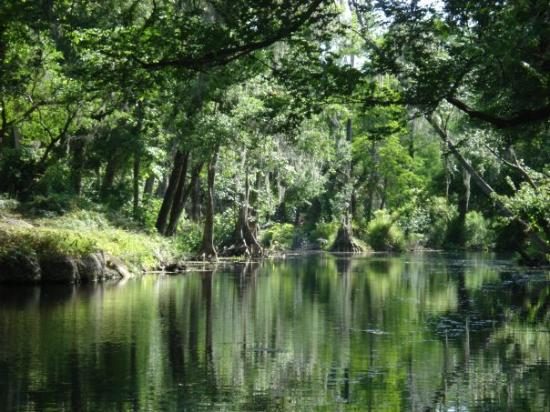 Ocala, Floryda: silver springs