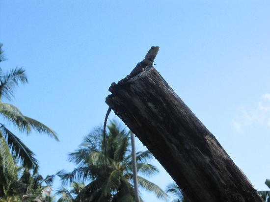 Vilamendhoo Island Resort & Spa: UN PARMIS D'AUTRE