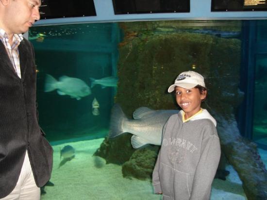 Aquarium de Biarritz: Rocher de la Vierge, Musee de la mer-Biarritz