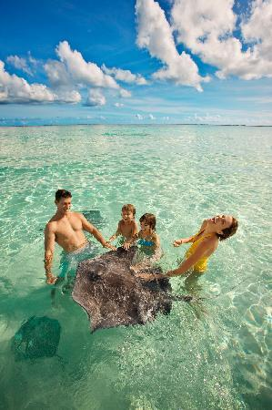 Kajmany: Grand Cayman's legendary Stingray City, where gentle Southern Atlantic stingrays gather.