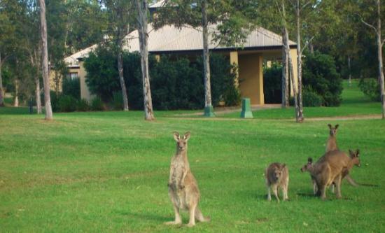 โรงแรมเลเชอร์อินน์โพโคลบินฮิลล์: This was where we stayed at the Wyndham Hunter Valley Resort.  The kangaroo visited us almost ev