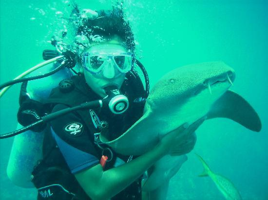 Belizean Shores Resort: Diving with the sharks