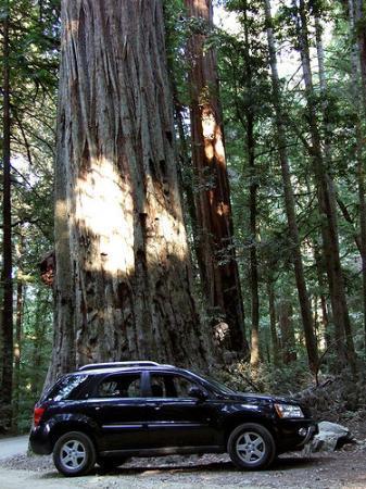 Redwood National Park: Redwood