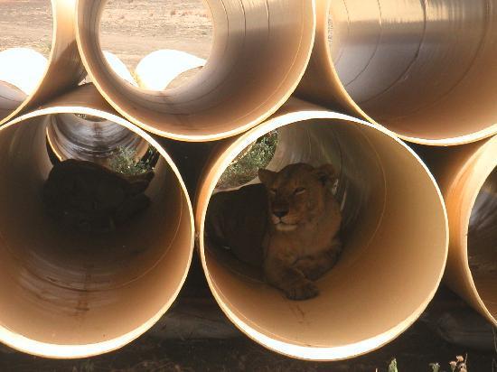 Severin Safari Camp: Überraschung auf einer Baustelle