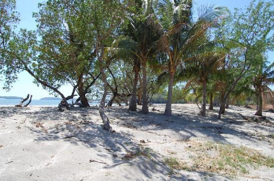 Boca Chica Plantation Club & Resort: Beach @ Boca Chica Planation Club