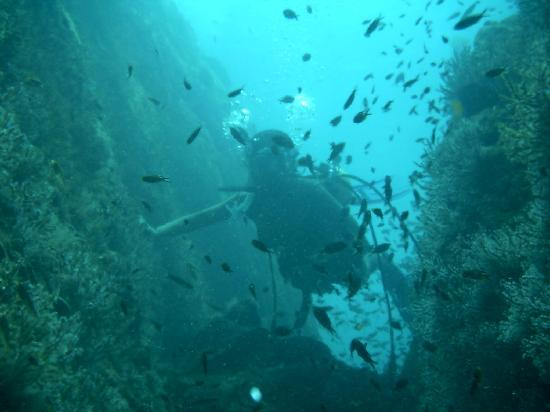 Boca Chica Plantation Club & Resort: Diving Gulf of Chiriqui