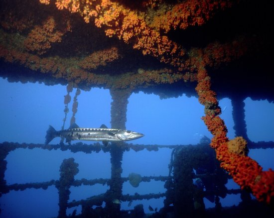 Blue Island DIvers : The WIT Shoal