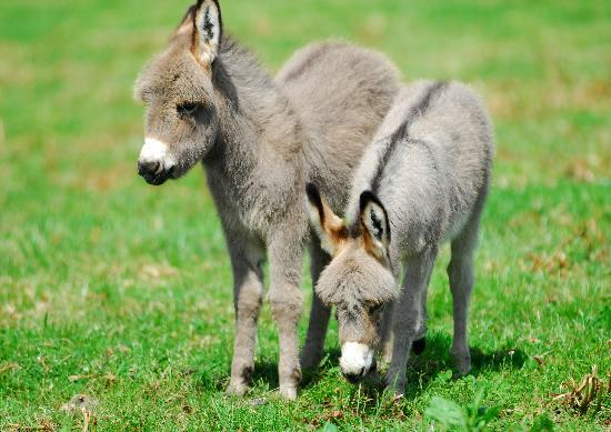 Baby Donkeys Picture Of Nettlecombe Farm Holiday
