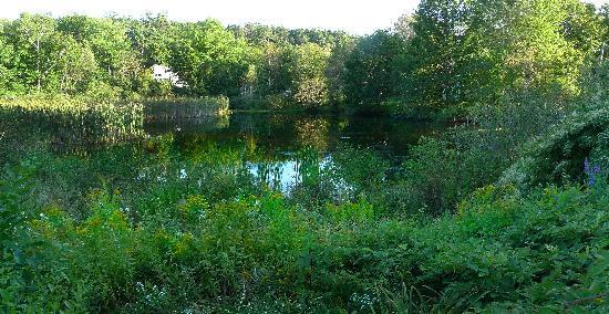 Pond House: Pond