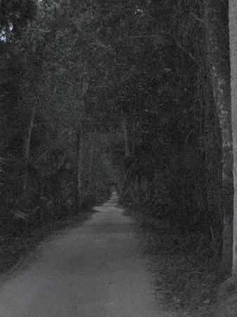 Bulow Plantation Ruins Historic State Park: Bulow Plantation Ruins SP - road into plantation