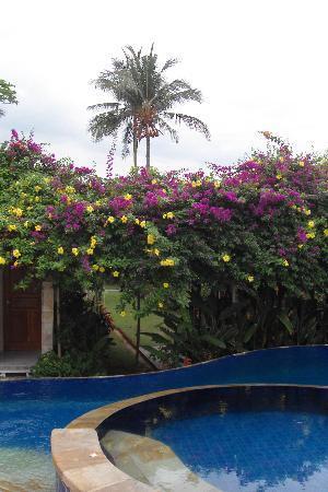Cleopatra Beach Bungalows: Une partie de la piscine et du jardin