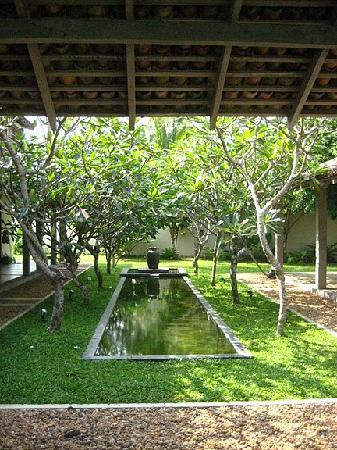 Frangipani Tree: Another nook of the hotel