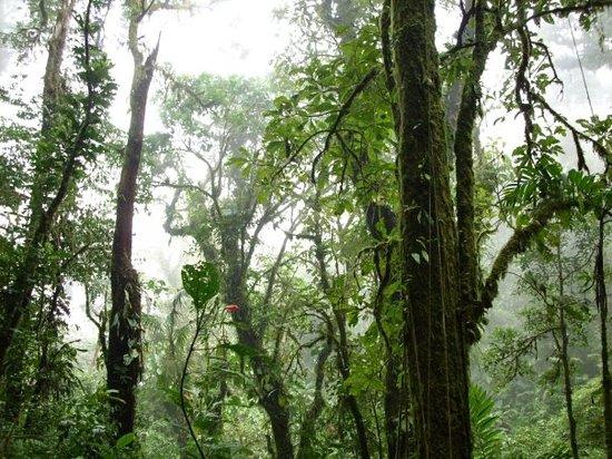 Aguia Tours: Nebelwald in Monteverde