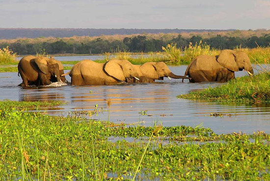 Maun, Botswana: The Elephant Crossing Okavango Delta