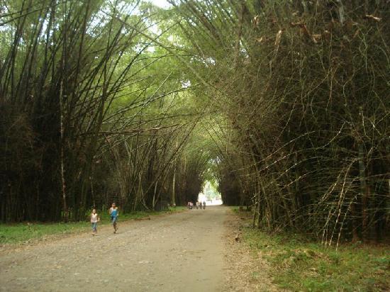 Honduras Shores Plantation: Lancetilla Botanical Garden
