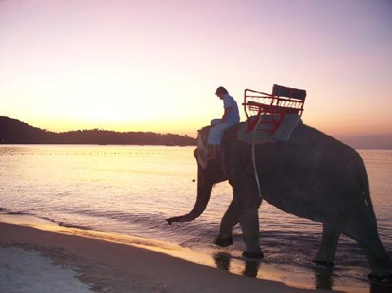 Amora Beach Resort: Beautiful sunset with Elephants