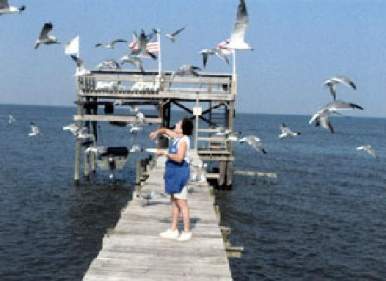 Bay Breeze Bed & Breakfast: White seagulls and blue water add to the outdoor pleasures of Bay watching.