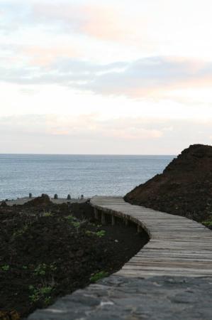 Punta de Teno Photo