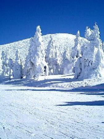 Yamagata Zao Onsen Ski Resort: 樹氷