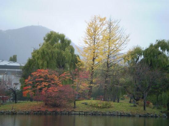 Nakajima Park : 池