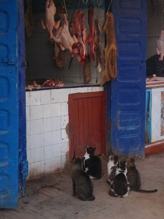 Essaouira, Morocco: hopefull