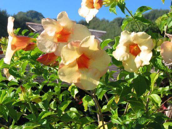 Fenua Mata'i'oa : Au coeur d'un magnifique jardin fleuri