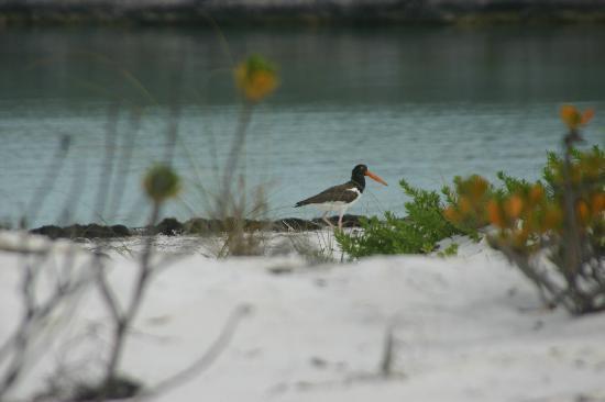 Sugar Beach Villa: the birds