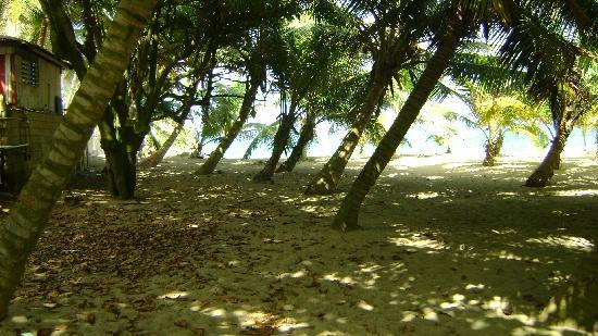 Tunel de Guajataca: palmas en el area de la playa