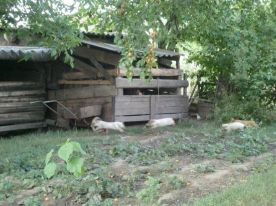Kherson, Oekraïne: Im Garten meiner Großeltern :)