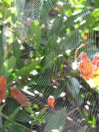 Web of Chelmsford