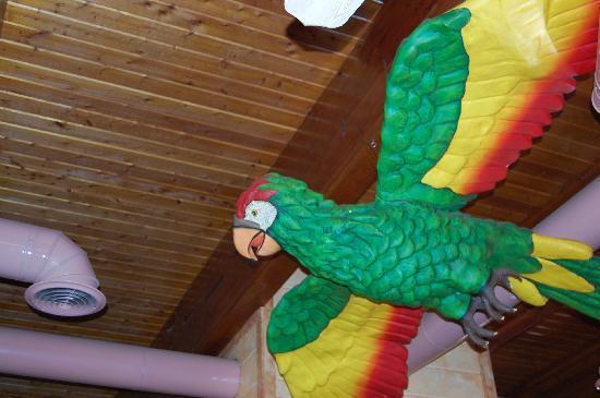 Latitude 31 Restaurant & Sports Bar: Big bird hanging inside!