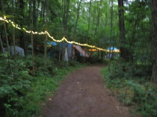 Happy Valley, OR: The lights with the forest visible