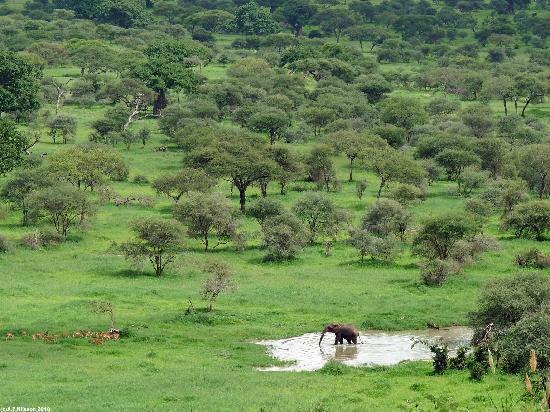 Tarangire Safari Lodge : The view from the lodge: elephant drinking & impalas