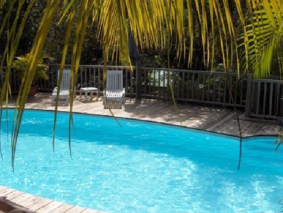 Au Jardin des Colibris: Piscine dans la végétation tropicale !
