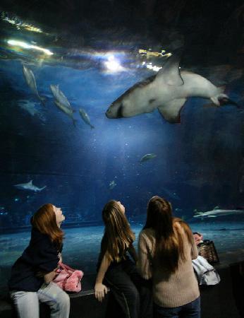 Jenks, Οκλαχόμα: Shark Tunnel