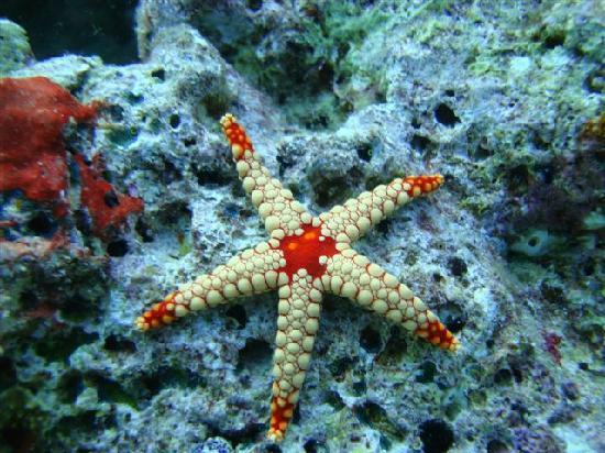 VOI Maayafushi Resort: What a star