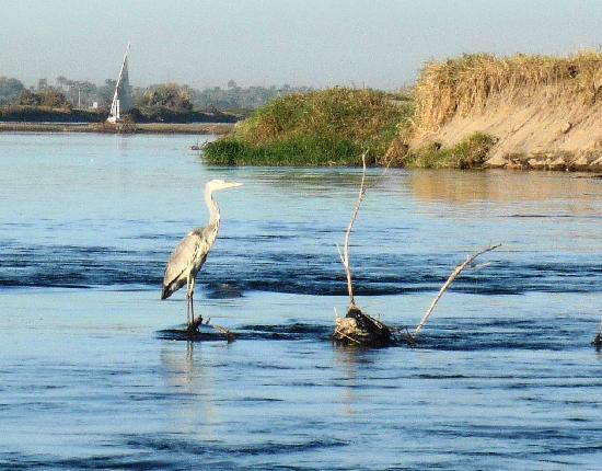Hilton Luxor Resort & Spa: Wonderful birdlife