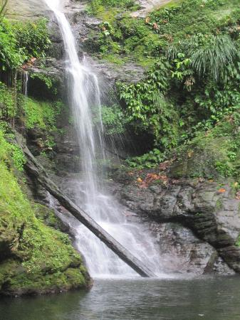 Las Cuevas Beach Lodge : Waterfall in the Rainforest